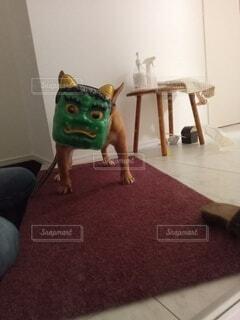 犬も節分の写真・画像素材[4242738]