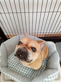 怒り犬の写真・画像素材[4330789]