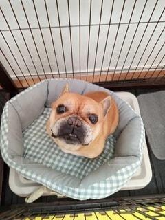 怒り犬の写真・画像素材[4330790]
