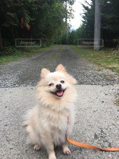 自然に満足な犬の写真・画像素材[1491826]