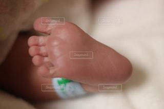 産まれたての足の写真・画像素材[1494701]