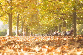 秋の風景の写真・画像素材[1491854]