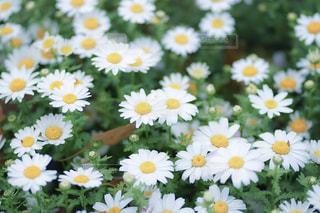 近くの花のアップの写真・画像素材[1683461]