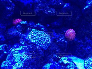 サンゴの写真・画像素材[1493503]