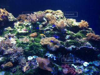 サンゴの写真・画像素材[1494969]