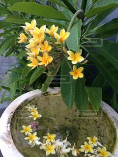 近くに植木鉢のアップの写真・画像素材[1505343]