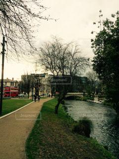 川の側の木がパスの写真・画像素材[1674762]