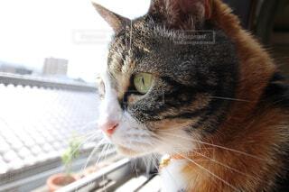 猫の写真・画像素材[146890]