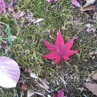 小さい秋みぃつけたの写真・画像素材[1614463]