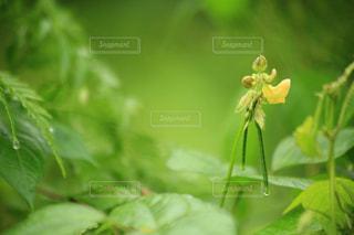 ひっそりと咲いているの写真・画像素材[1496144]