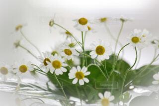 テーブルの上の花の花瓶の写真・画像素材[1508842]