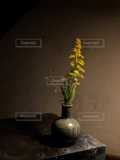 花の写真・画像素材[2584349]