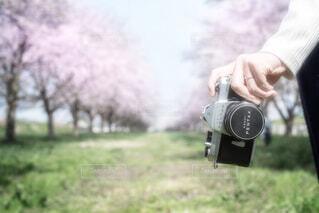 花道の写真・画像素材[1496705]