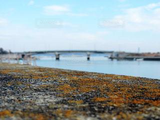 橋と海の写真・画像素材[1745766]