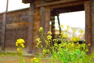 建物と花の写真・画像素材[1745798]