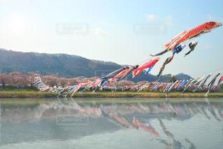 桜と鯉のぼりの写真・画像素材[1745803]