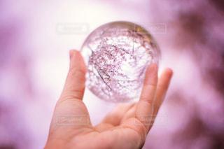 水晶に写ってる桜の写真・画像素材[1745876]
