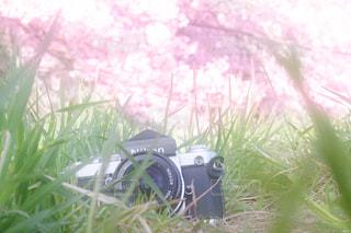 茂みの中のカメラと桜の写真・画像素材[1745893]