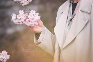 桜を持っている男性の写真・画像素材[1745908]