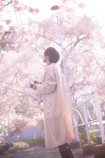 桜に囲まれての写真・画像素材[1745922]