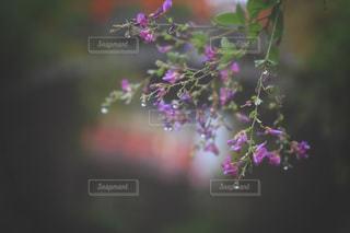 近くの花のアップの写真・画像素材[1745991]