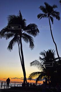 ヤシの木とビーチの写真・画像素材[1745993]