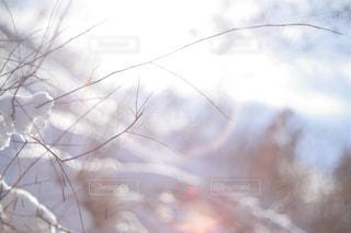 冬の空の写真・画像素材[1746239]
