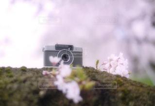 桜とハーフカメラの写真・画像素材[1746250]