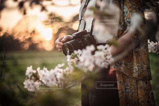 夕桜の写真・画像素材[1746253]