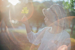 葉を光にかざしての写真・画像素材[1746263]