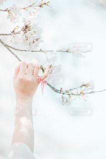 桜と約束の写真・画像素材[2081835]