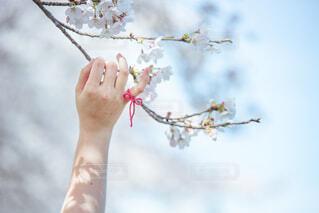 桜と約束の写真・画像素材[2081838]