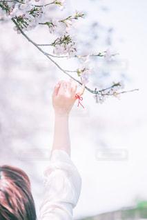 桜と約束の写真・画像素材[2081843]