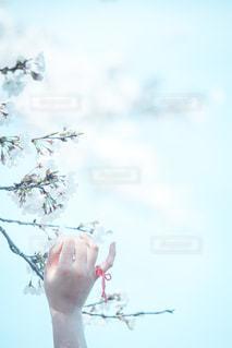 桜と約束の写真・画像素材[2081846]