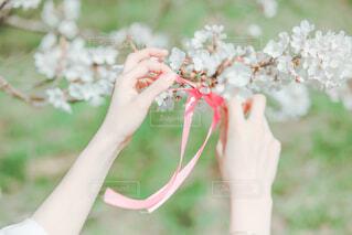 桜とリボン🎀の写真・画像素材[2081858]