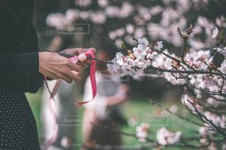 近くの花のアップの写真・画像素材[2081862]