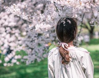 桜とリボンと後姿の写真・画像素材[2081912]