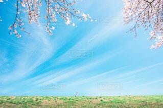 青空と桜と雲の写真・画像素材[2082027]