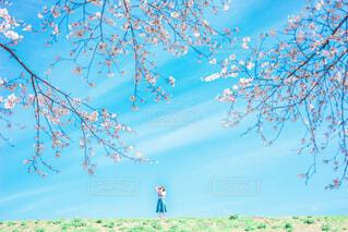 青空と桜の写真・画像素材[2082032]