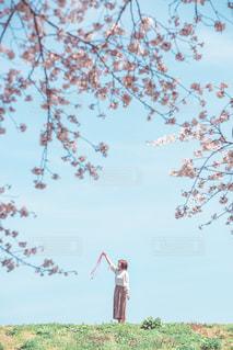 桜と空とリボンの写真・画像素材[2082038]