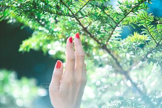 森の緑とネイルの赤の写真・画像素材[2118428]