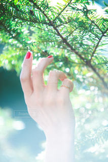 木々とネイルの写真・画像素材[2118438]