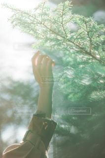 木々に手をかざす。の写真・画像素材[2118450]