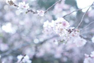 近くの花のアップの写真・画像素材[1822092]