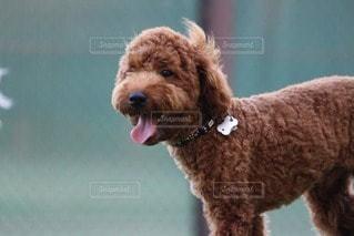 犬の写真・画像素材[48706]
