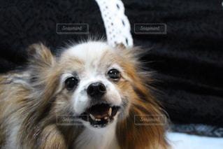 犬の写真・画像素材[222200]