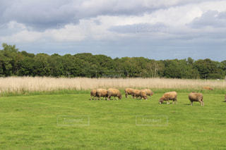 羊 - No.223142