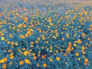花の写真・画像素材[1498213]