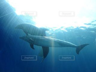 イルカの写真・画像素材[1729366]