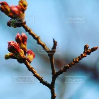 自然の写真・画像素材[48822]